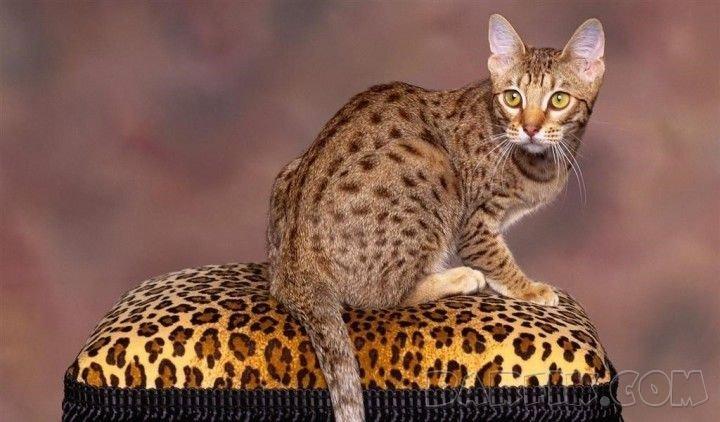 Пакетируем контейнеры и дизельные генераторы.